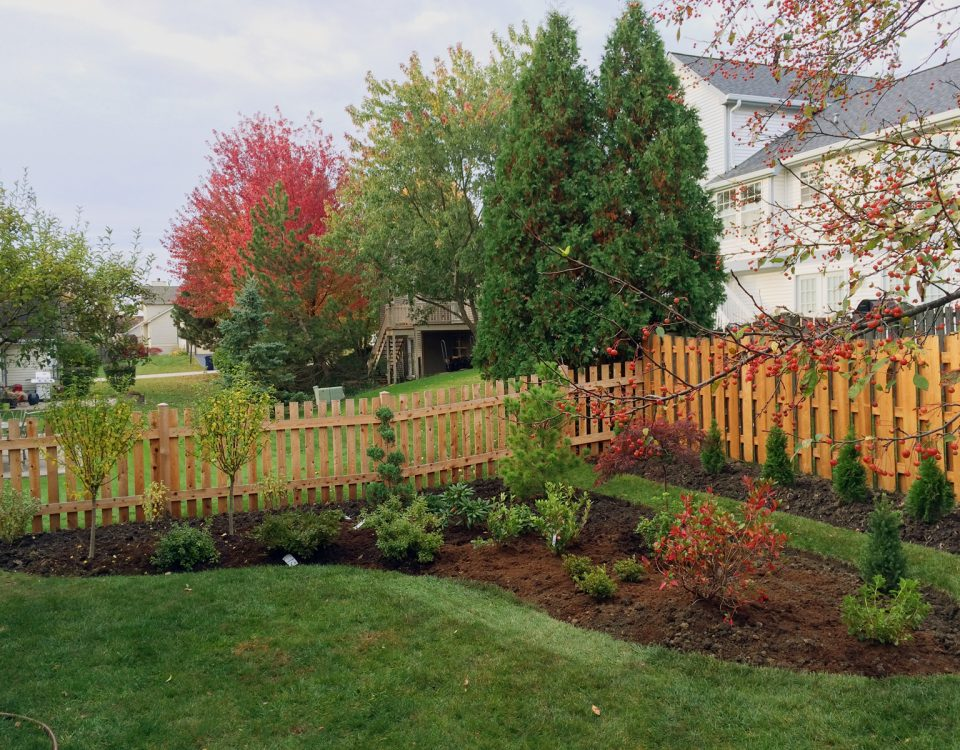 azaleas-rhododendrons-planting-after-1