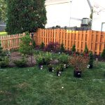 azaleas-rhododendrons-planting-before-1
