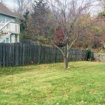design-planting-shrubs-trees-fencing-before-3