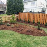 azaleas-rhododendrons-planting-after-2